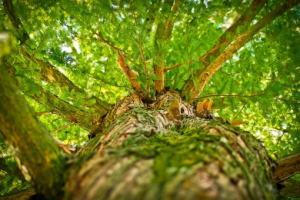 Environnement et grandes réformes 2017